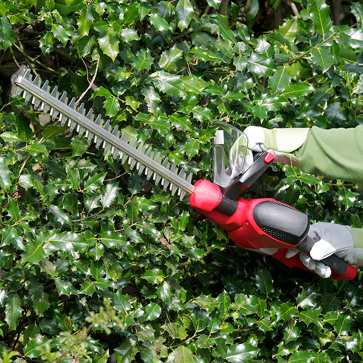 Hedge and Shrub Care
