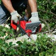 Mantis Pro Electric Chainsaw Sawing a Tree Branch
