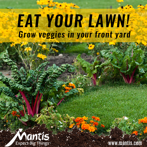 Veggies for your front yard
