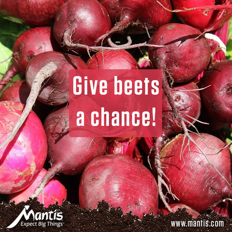 Give Beets a Chance: Planting, Growing, and Harvesting Beets!