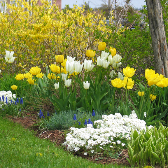 How To Create a Flowering Bulb Garden