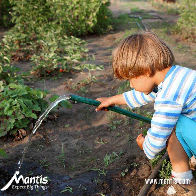 Benefits of School Gardening