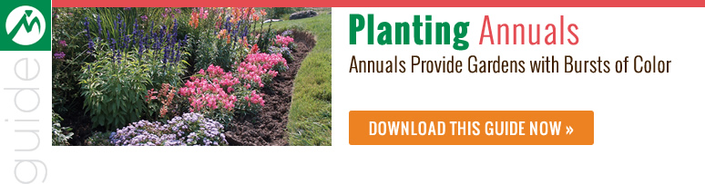 Planting annuals guide