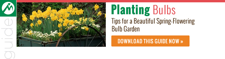 Planting bulbs guide
