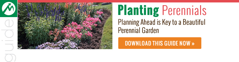planting-perennials-guide