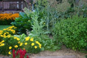 vegetable garden and flower bed ideas