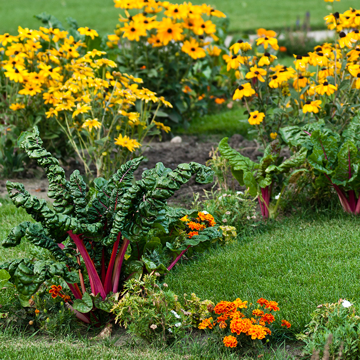 Flower Bed & Backyard <br/ >Vegetable Garden Ideas