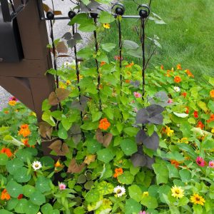 Adjustable Garden Trellis with mailbox CTTLS-01