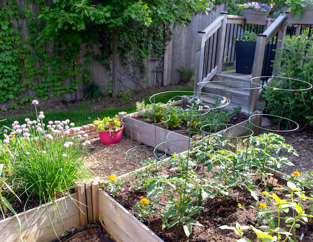 raised bed gardens in backyard