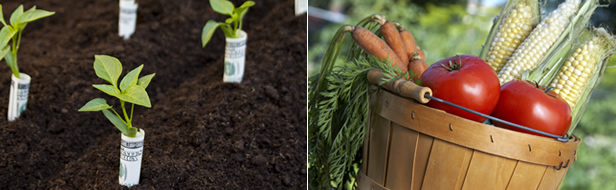 growing your own vegetables saves money