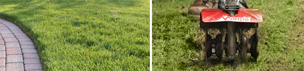 How and When to Aerate Your Lawn