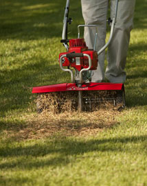 Should You Dethatch Your Lawn?
