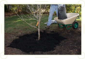 Add Mulch
