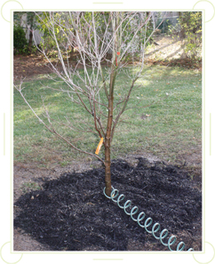 Nurture Your New Tree